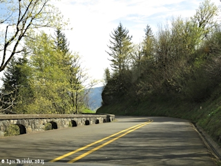 Image, 2015, Historic Columbia River Highway, Oregon, click to enlarge