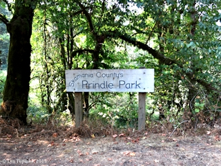 Image, 2015, Prindle Park, Washington, click to enlarge