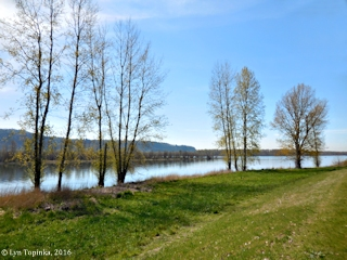 Image, 2016, Columbia River, Steigerwald Lake NWR, click to enlarge