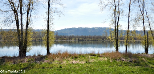 Image, 2016, Steigerwald Lake NWR, click to enlarge