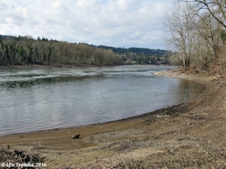 Image, 2016, Willamette River, Oregon, click to enlarge