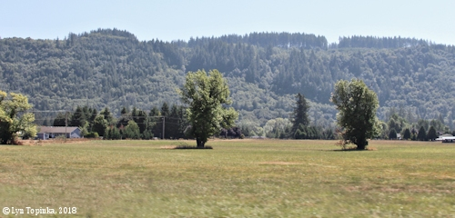 Image, 2018, Chelatchie Prairie, Washington, click to enlarge