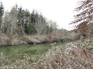 Image, 2018, Vanport Wetlands, Mud Slough, Portland, Oregon, click to enlarge