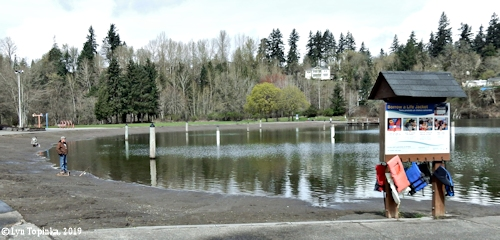 Image, 2019, Klineline Pond, Salmon Creek, Vancouver, Washington, click to enlarge